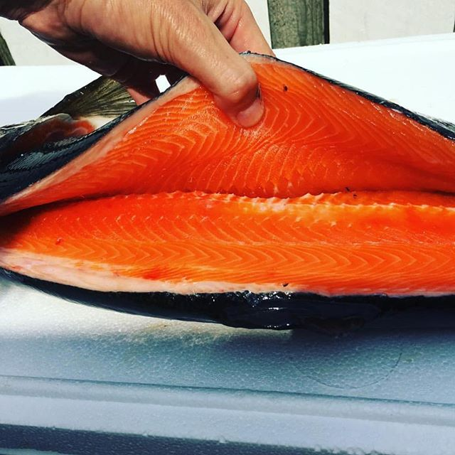 Atlantic Sapphire Salmon Held Open Two Sides