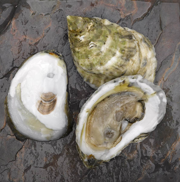 Winterpoint Oysters
