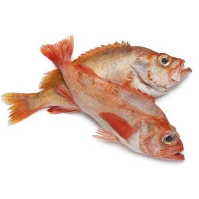 Atlantic Redfish