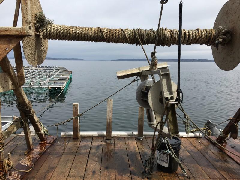 Bangs Island Mussels Harvest
