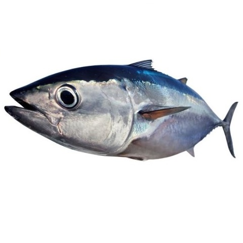 bigeye tuna browne trading species definition