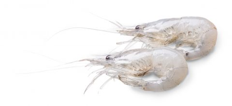 Camarones (Shrimp)