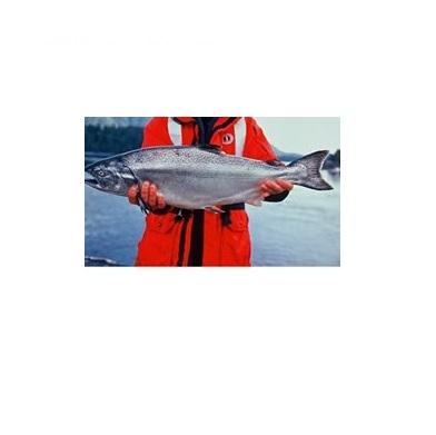 Creative Salmon Kings