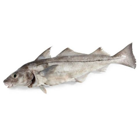 Whole Haddock