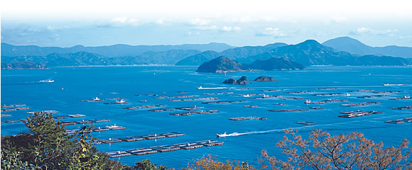Aquafarms in Japan where our Yellowtail are raised.