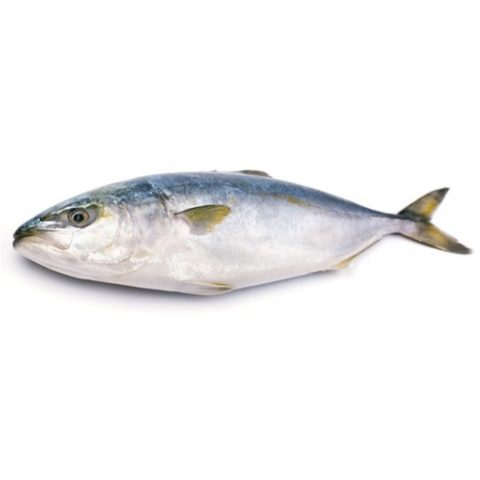 Quality Fresh Seafood - Available to Buy for Next Day Delivery