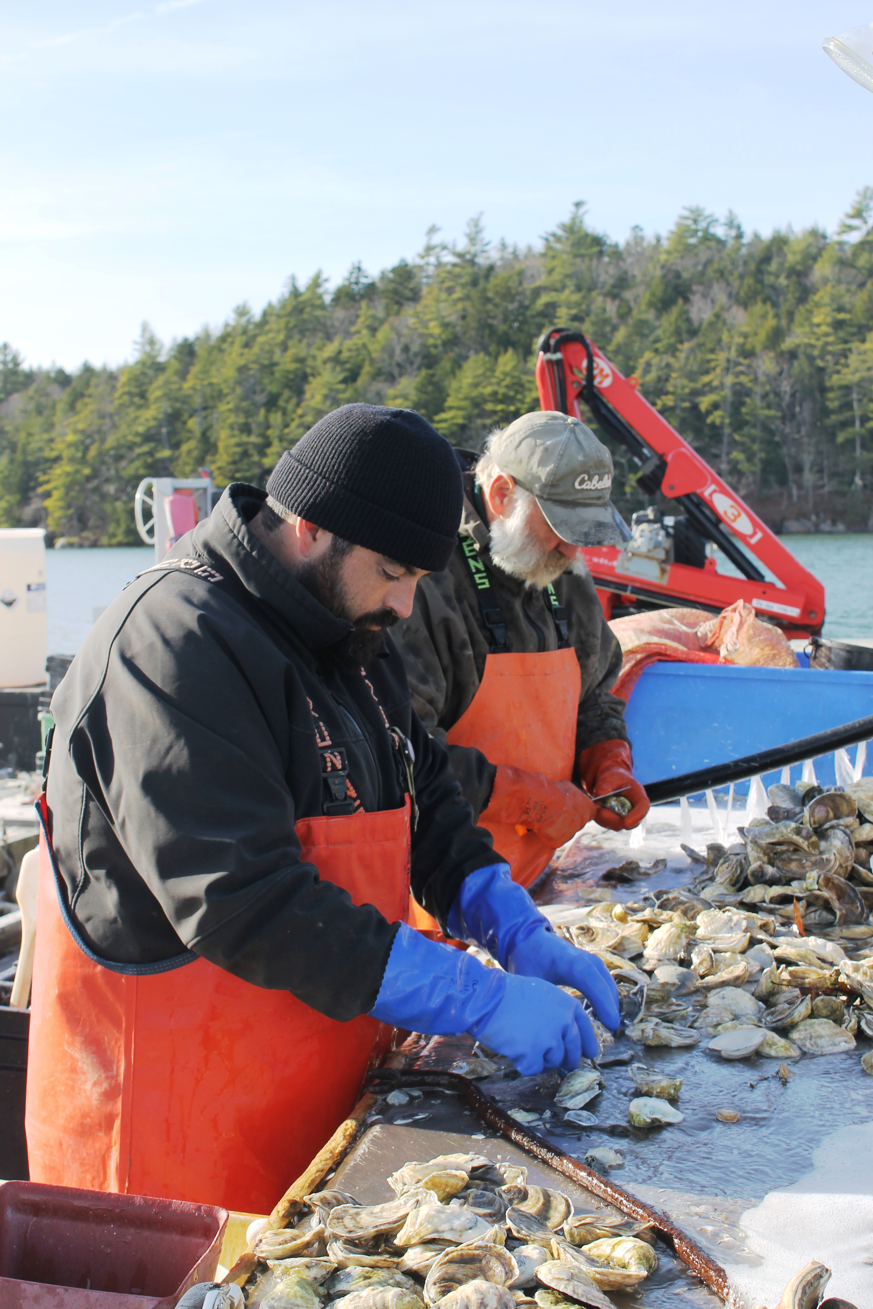 Winter Point Oyster Farm