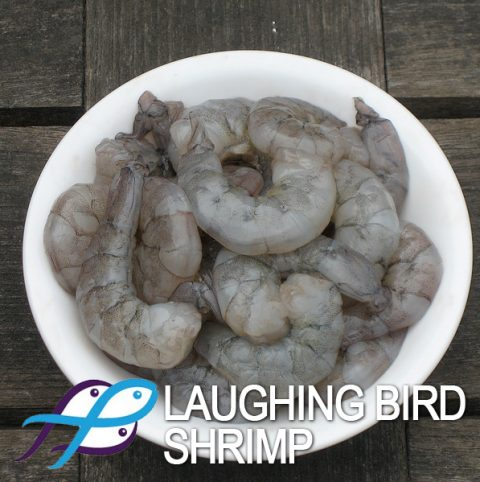 Laughing Bird Shrimp