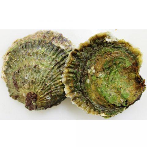 Belon Oyster