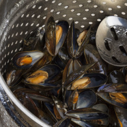 Check live shellfish – such as mussels – before and after preparation and discard those that do not open after cooking.