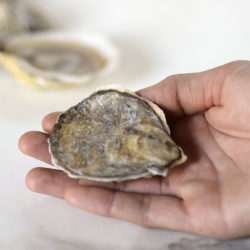Oyster Shucking Step One