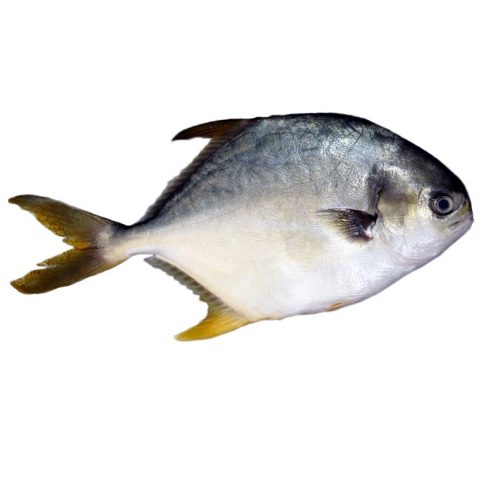 Pompano