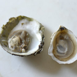 Oyster Serving
