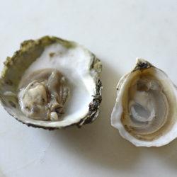 Oyster Serving