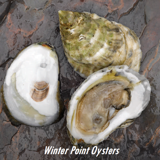 Winter Point Oysters