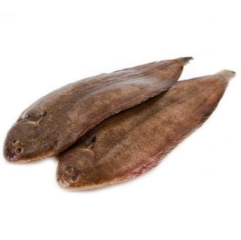 Two Dover Sole