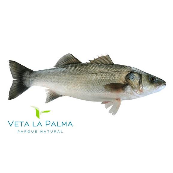Spanish Sea Bass/Lubina